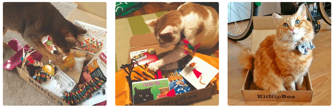 Barkbox For Cats Monthly Subscription Boxes For Cats