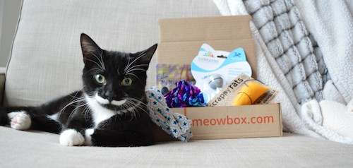meowbox review box
