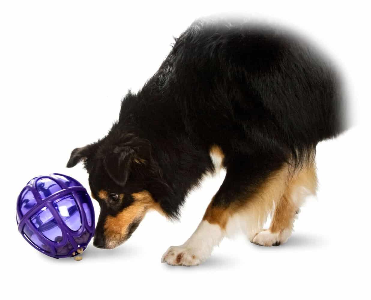 Toys For Dogs : Best treat dispensing dog toys k of mine