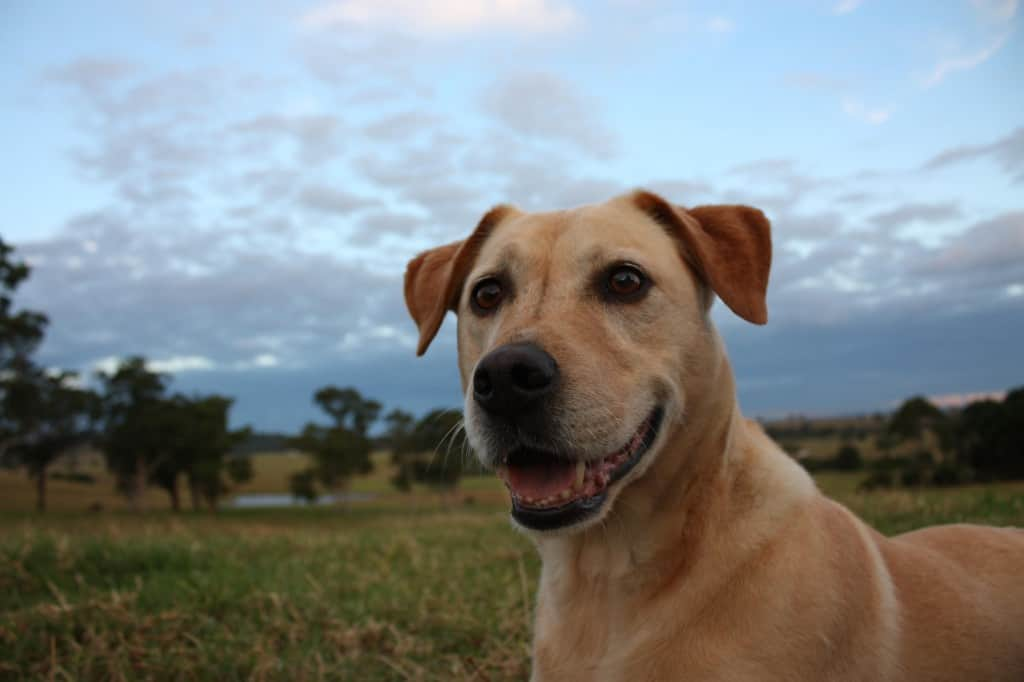 new dog owner advice