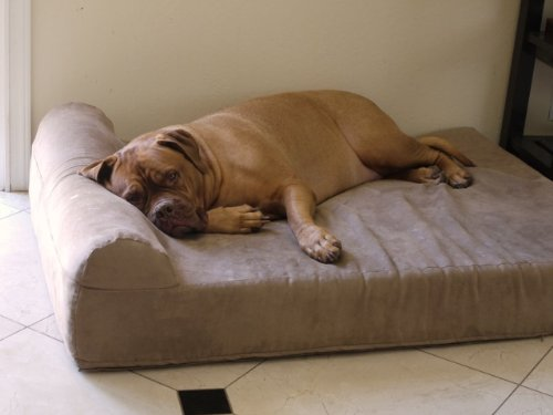 Best Dog Beds For Large Dogs Reviews Uk