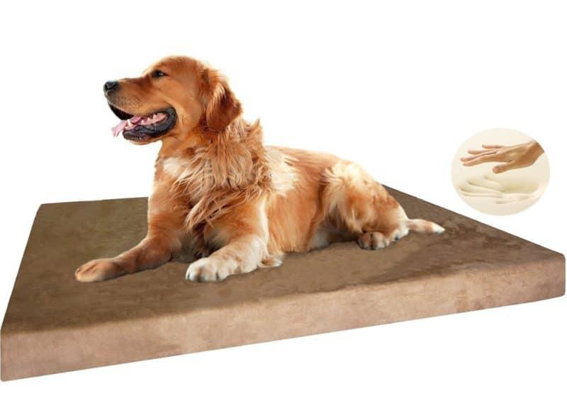 5 best dog beds for senior arthritic dogs