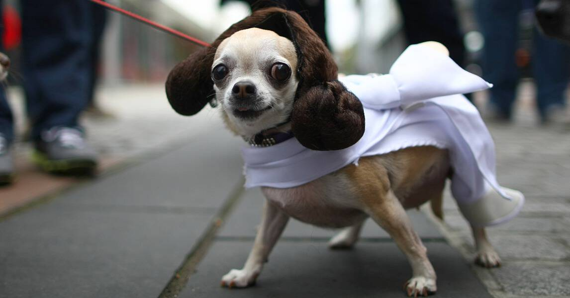 dog costumes star wars & 15 Dogs Dressed as Star Wars Characters