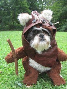 dog-ewok