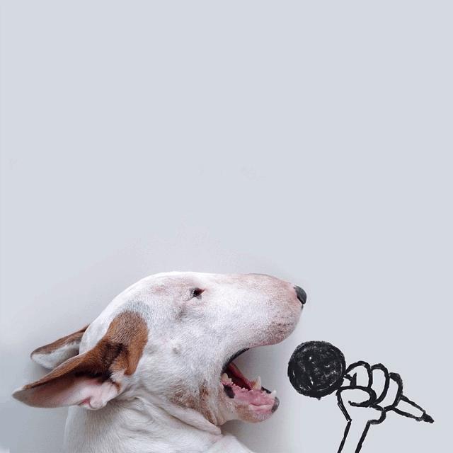 dog-illustrations