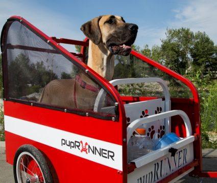 dog kickstarters