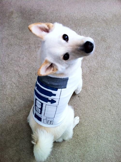 R2D2 Dog