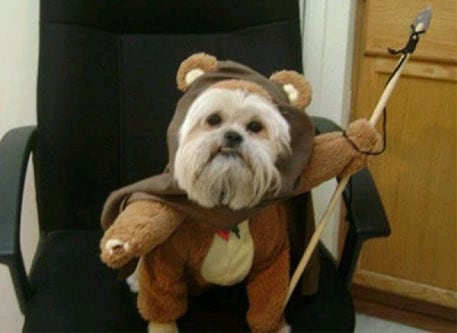ewok dog costume & 15 Dogs Dressed as Star Wars Characters