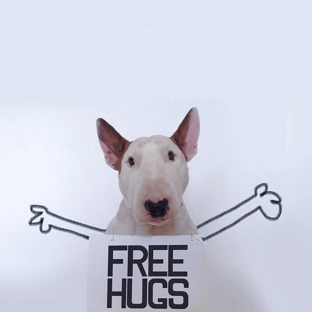 freehugsdog