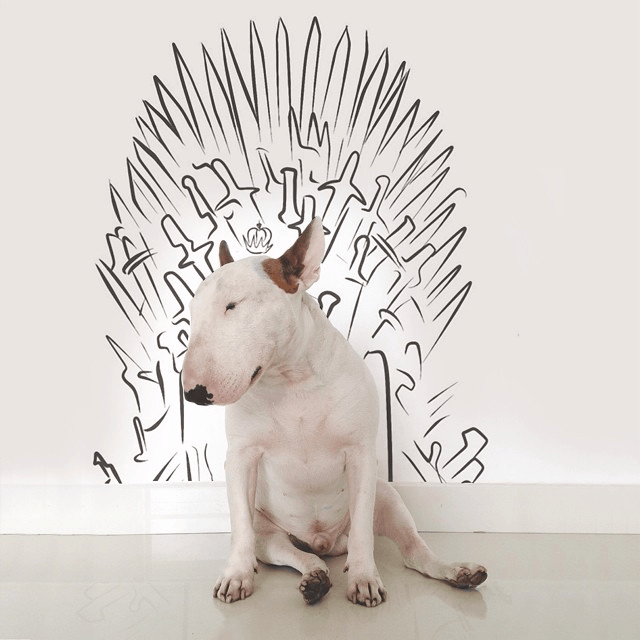 game-of-thrones-dog