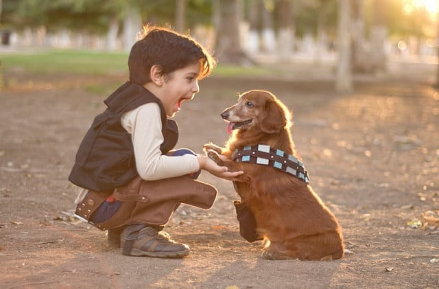 22 star wars dog costumes that you need rn wicket ewok dog costume solutioingenieria Image collections