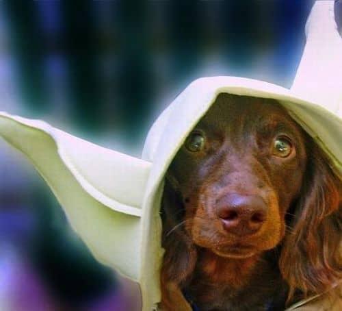 star wars yoda costume for dog