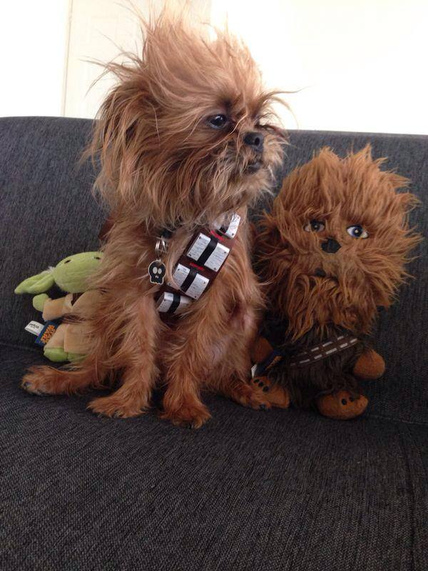 star wars dogs & 15 Dogs Dressed as Star Wars Characters