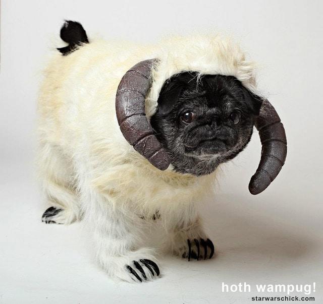 starwars dog costumes