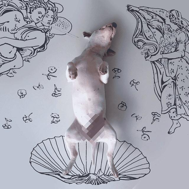 venus-dog