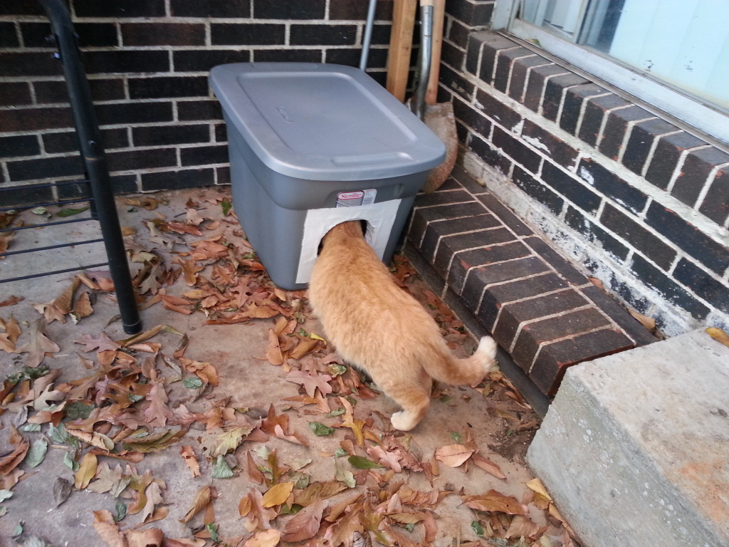 stray-cat-shelters