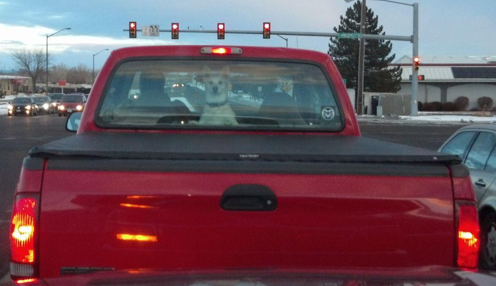 dog in car behind
