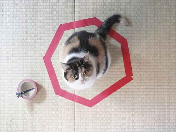 circle-trap-cat