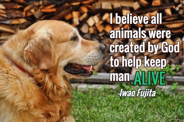 Charming Dog Loss Quotes