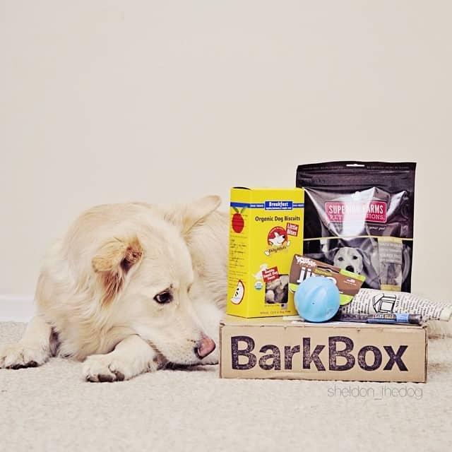 dog presents