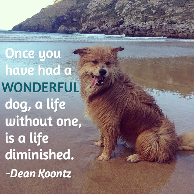 Dog Loss Quotes Mesmerizing 13 Dog Loss Quotes Comforting Words When Losing A Friend