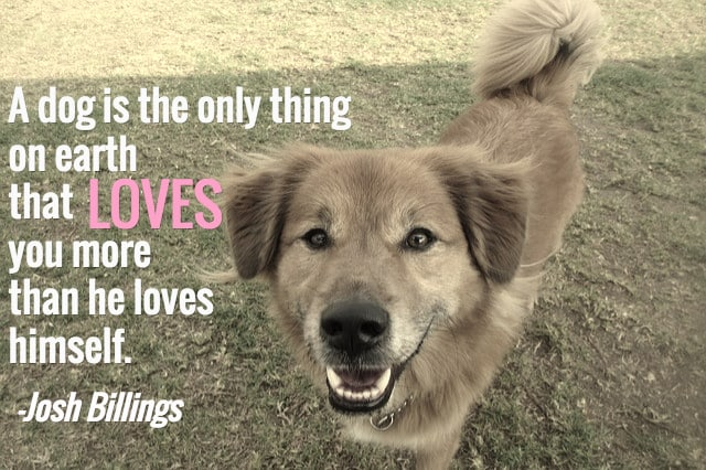25 Dog Quotes With Pictures!