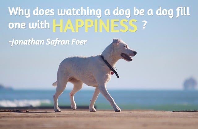 25 Dog Quotes (With Pictures