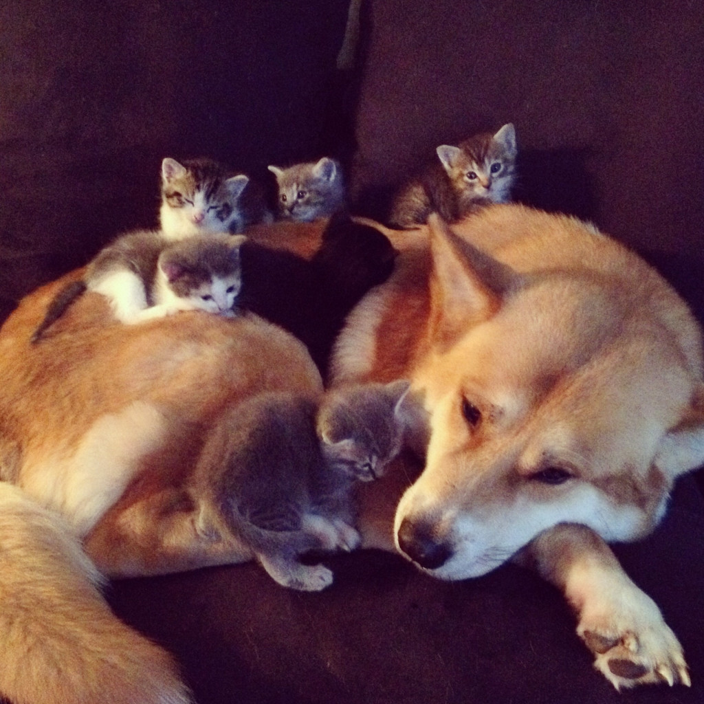 dog with kittents