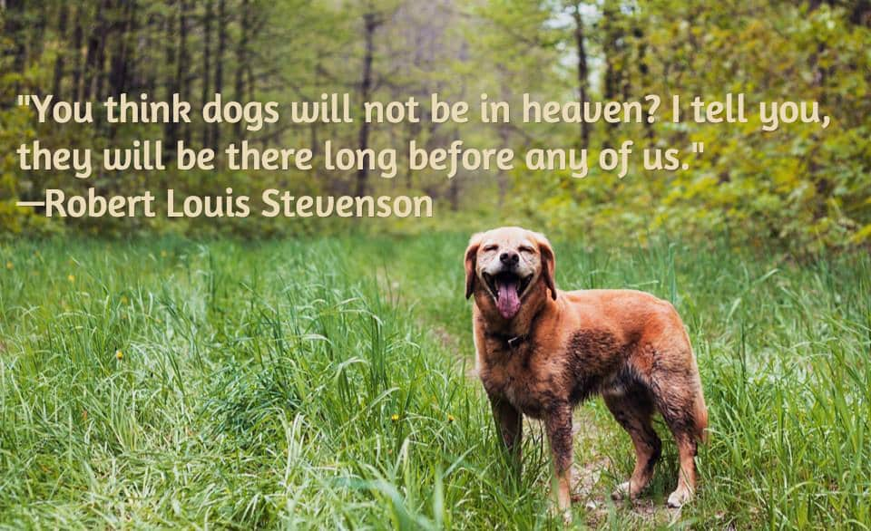 Losing A Dog Quotes Interesting 13 Dog Loss Quotes Comforting Words When Losing A Friend