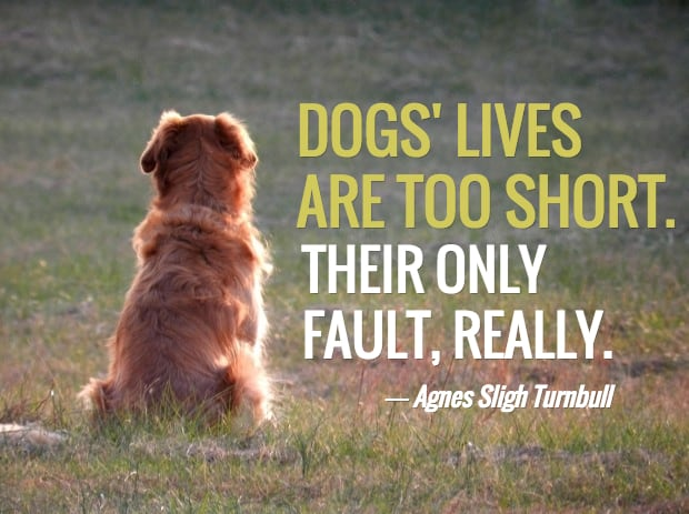 Loss Of A Pet Quote Adorable 13 Dog Loss Quotes Comforting Words When Losing A Friend
