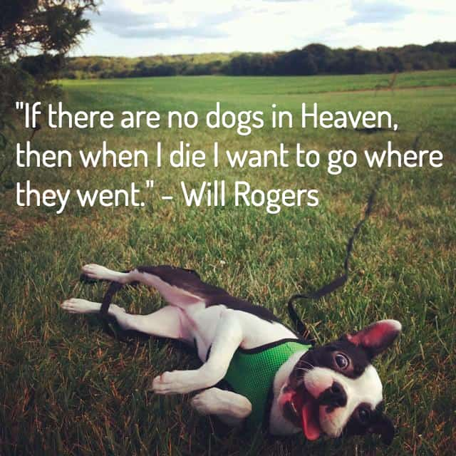 Quotes For Loss Beauteous 13 Dog Loss Quotes Comforting Words When Losing A Friend