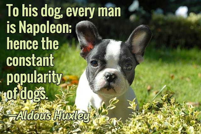 quotes about puppies