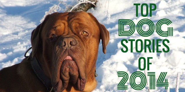 top dog stories of 2014