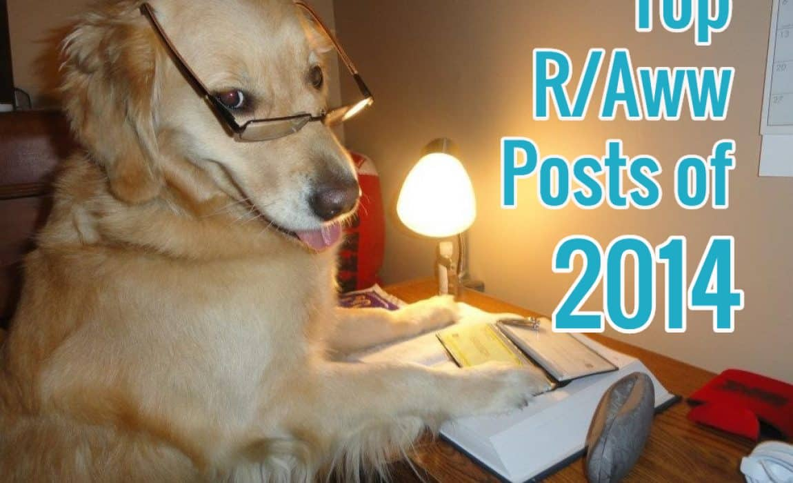 19 Top R Aww Photos Of 2014 The Cutest Pets Of The Year