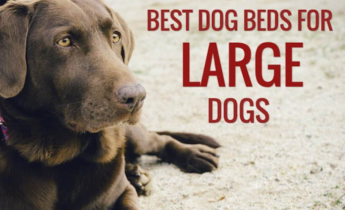 Picture of: 12 Best Dog Beds For Large Dogs 2020 Review Dog Bed Reviews