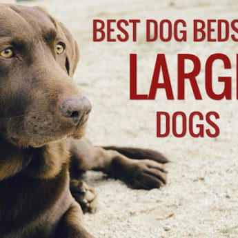 best beds for large dogs
