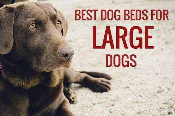 12 Best Dog Beds For Large Dogs Dog Bed Reviews