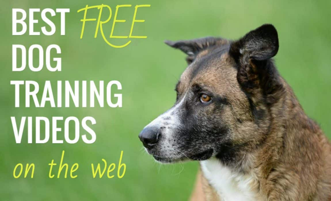 6 Best Free Online Dog Training Video Courses: Tips From Pro
