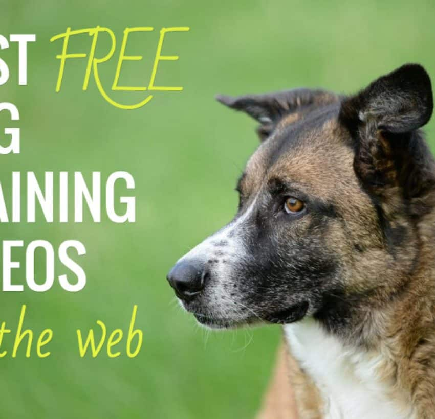 free online dog training courses uk