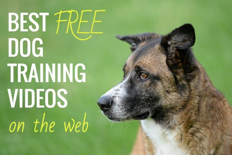 Dog training online free
