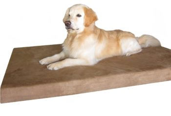 large orthopedic dog beds