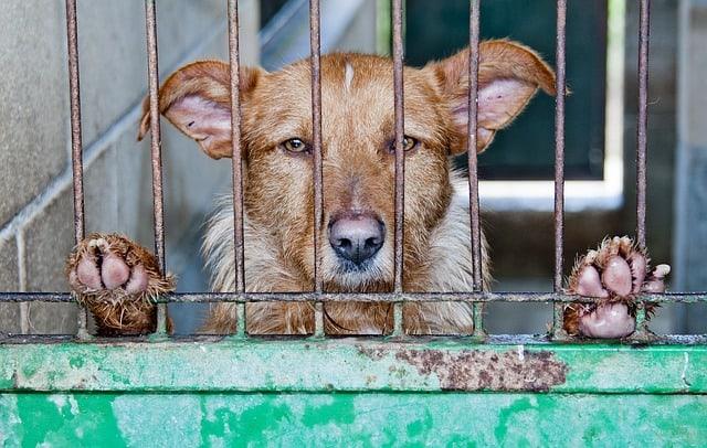 pet abuse information