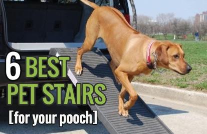 dog steps