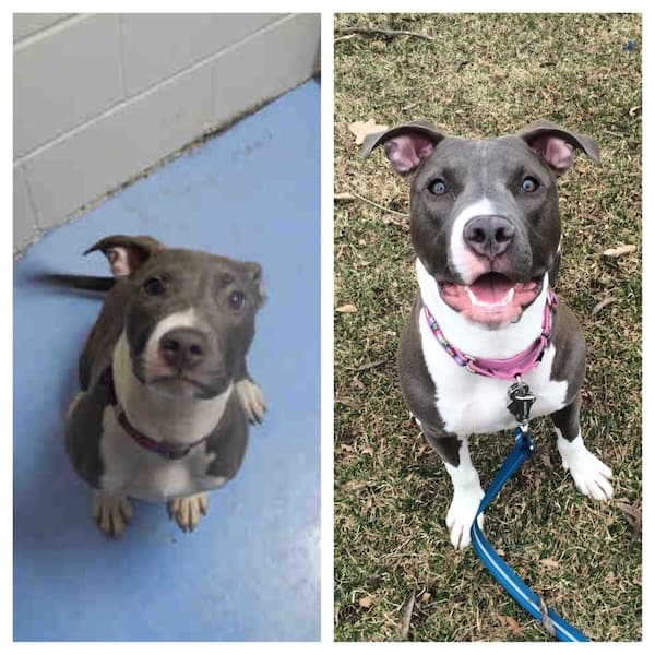 dog before and after adoption