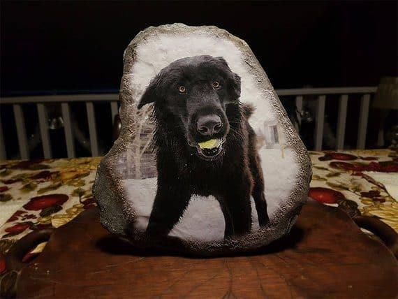 dog photo stone
