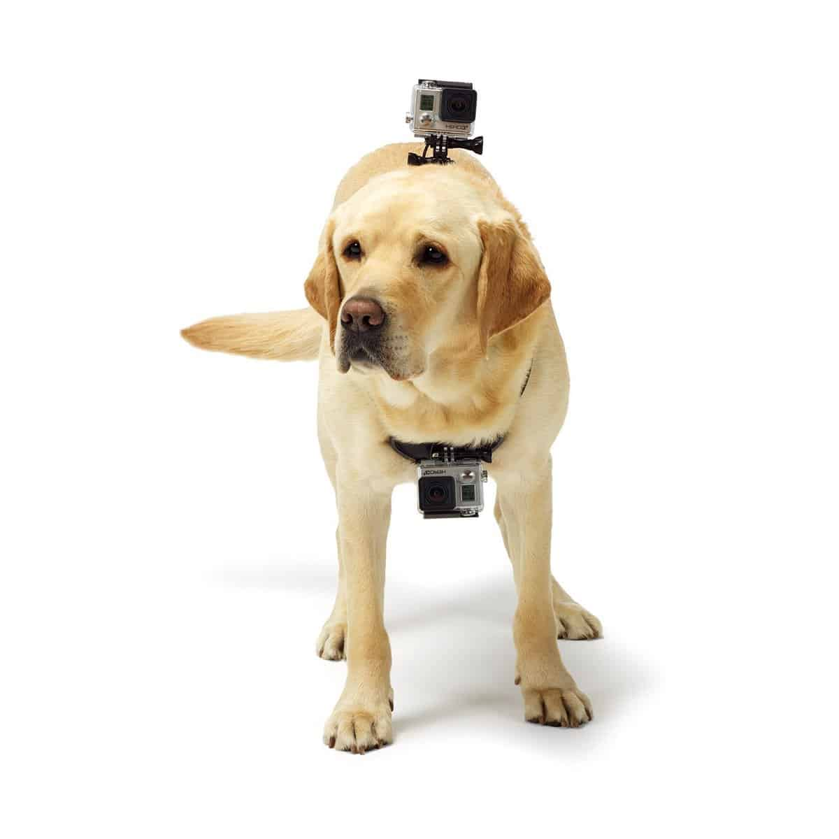 Gopro Dog Mount 3 Different Choices For Camera Canines