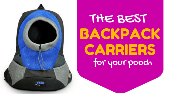 5 Best Dog Backpack Carriers: Reviews & Ratings