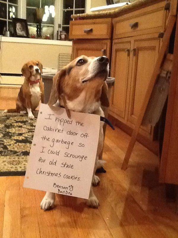 17 Hilarious Dog Shaming Pictures