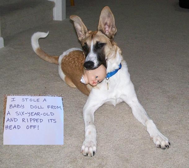 funny dog shaming image
