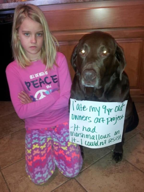 funny dog shaming pics